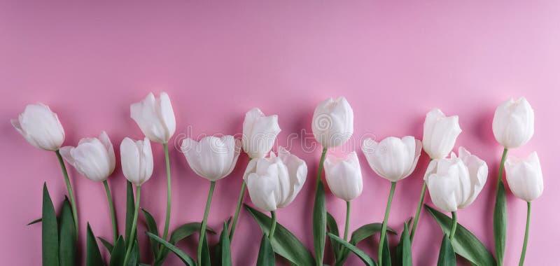 Flores blancas de los tulipanes sobre fondo rosa claro Tarjeta de felicitación o invitación de la boda imagen de archivo