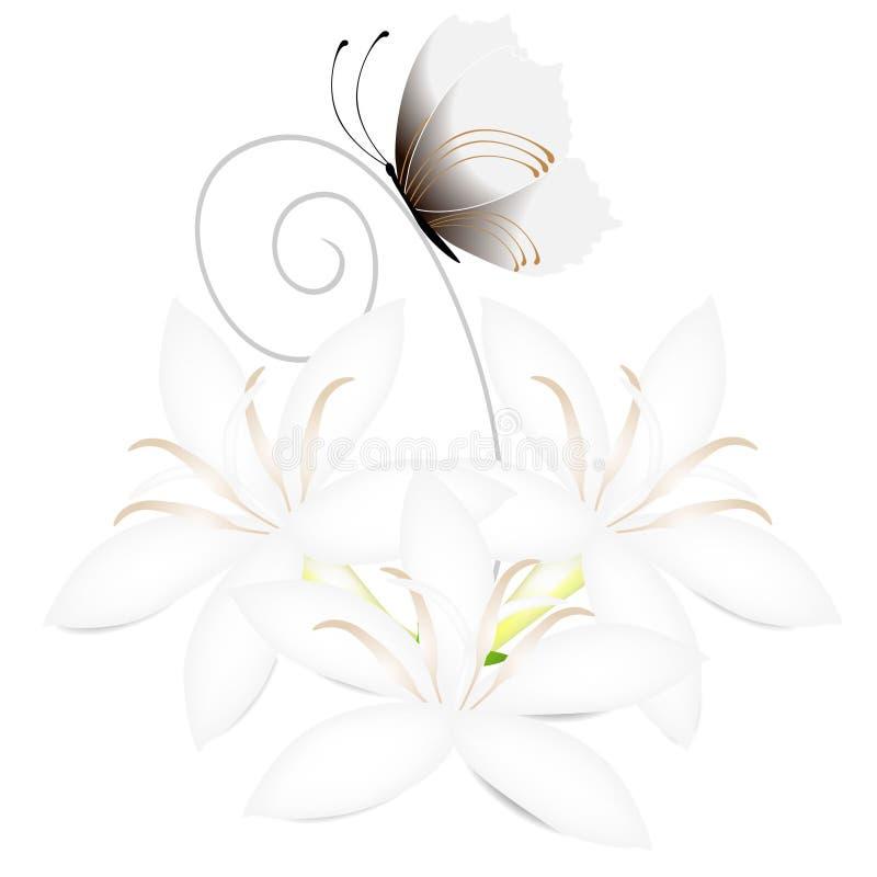 Flores blancas del cafeto con la mariposa aislada en el fondo blanco stock de ilustración