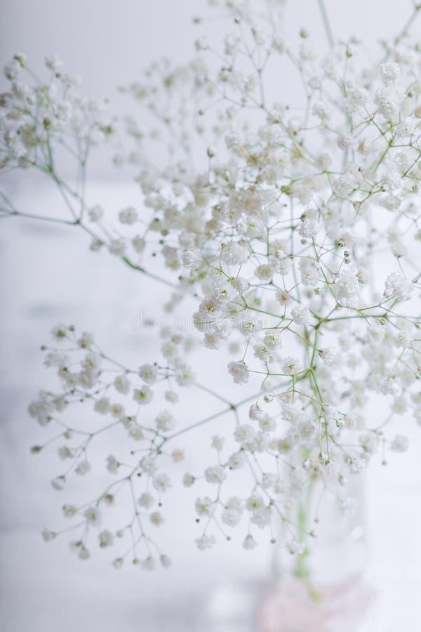 Flores blancas del Gypsophila en un fondo blanco imagen de archivo libre de regalías