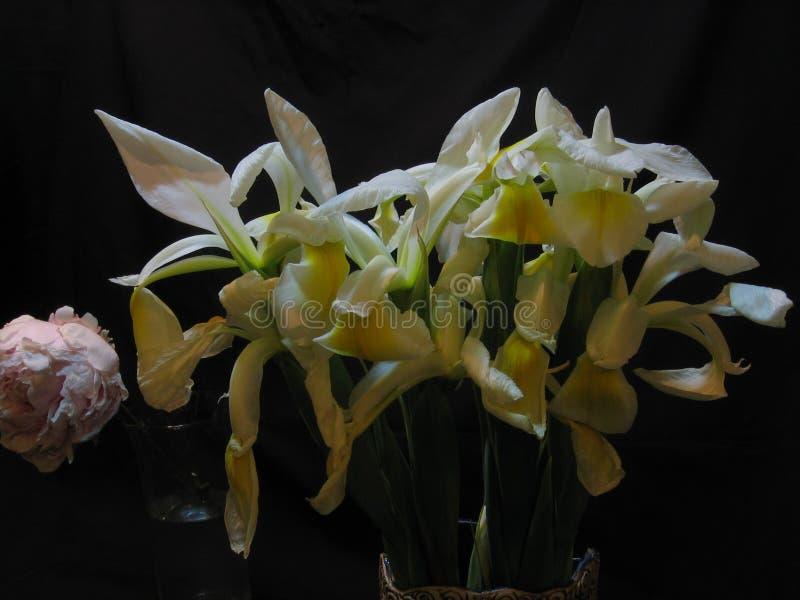 Flores blancas del iris y una peonía imagen de archivo libre de regalías