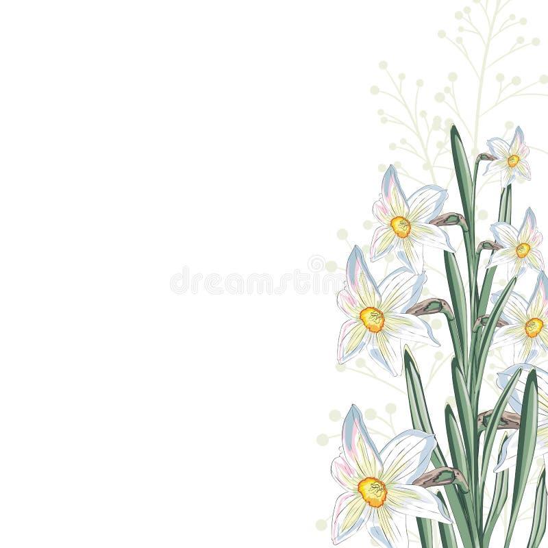 Flores blancas del narciso con las hojas y las hierbas Un ramo decorativo de la primavera ilustración del vector