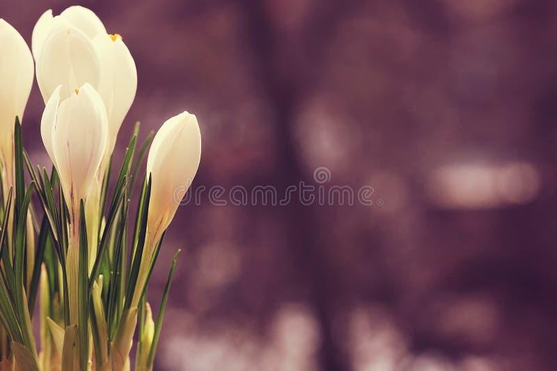 Flores blancas delicadas foto de archivo