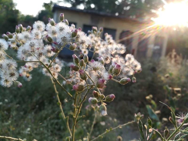 Flores blancas en brillo del sol imagen de archivo
