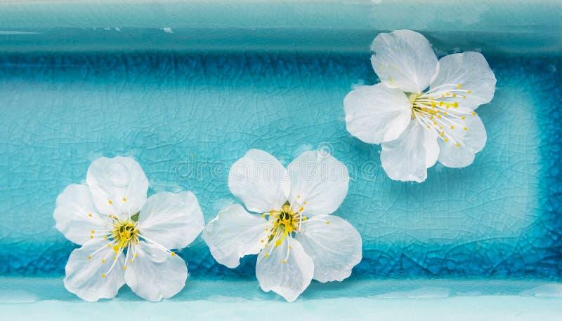 Flores blancas en el cuenco azul de agua, balneario, bandera imagenes de archivo