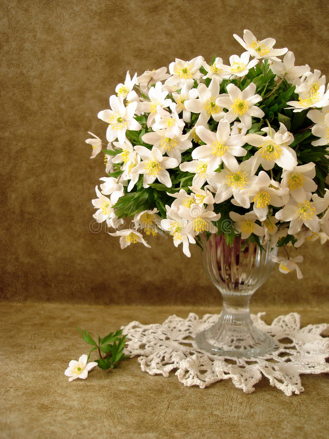 Flores blancas en florero fotografía de archivo libre de regalías