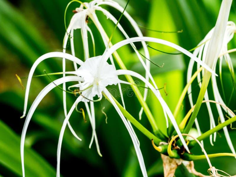 Flores blancas en la selva fotografía de archivo libre de regalías