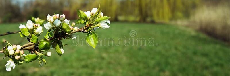 Flores blancas en un fondo coloreado foto de archivo libre de regalías