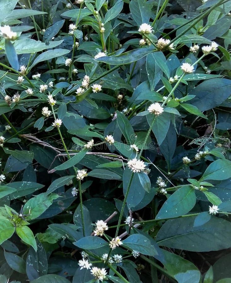 Flores blancas en un mini jardín foto de archivo