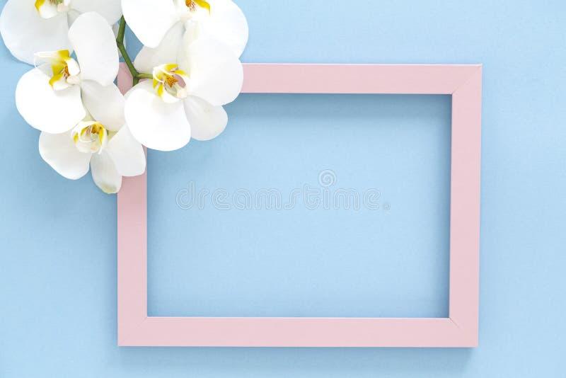 Flores blancas hermosas del Phalaenopsis de la orquídea, marco rosado de madera de la foto en fondo azul Visi?n superior, endecha fotos de archivo