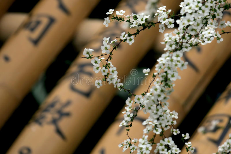"""Flores blancas minúsculas en 花 del  del å° del ² del ‰ del è del ½ del ç™ del """"del æ˜¥å¤©çš de la primavera imagen de archivo libre de regalías"""