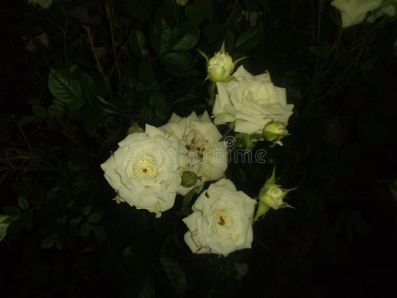 Flores blancas muertas y floración foto de archivo
