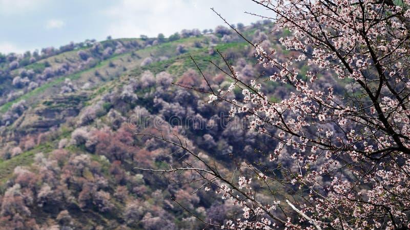 Flores blancas sorprendentes con cielo azul en primavera imagen de archivo libre de regalías