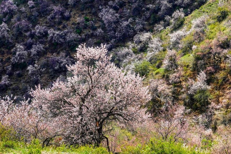 Flores blancas sorprendentes con cielo azul en primavera fotografía de archivo