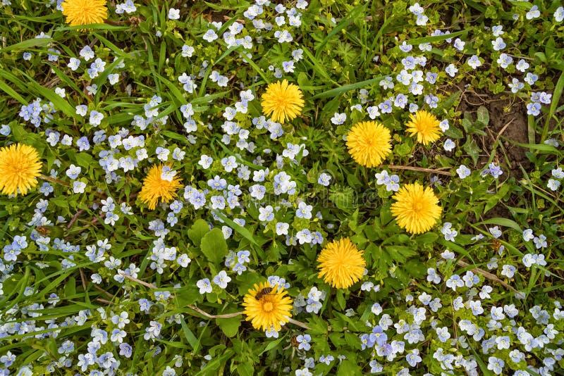 Flores blancas y amarillas en follaje verde fotografía de archivo