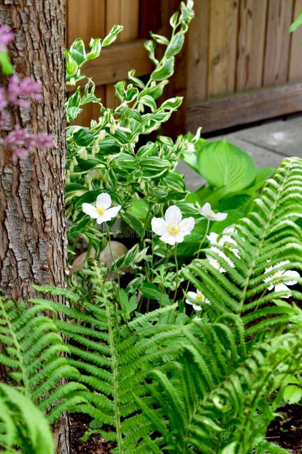 Flores blancas y Fern Fronds foto de archivo libre de regalías