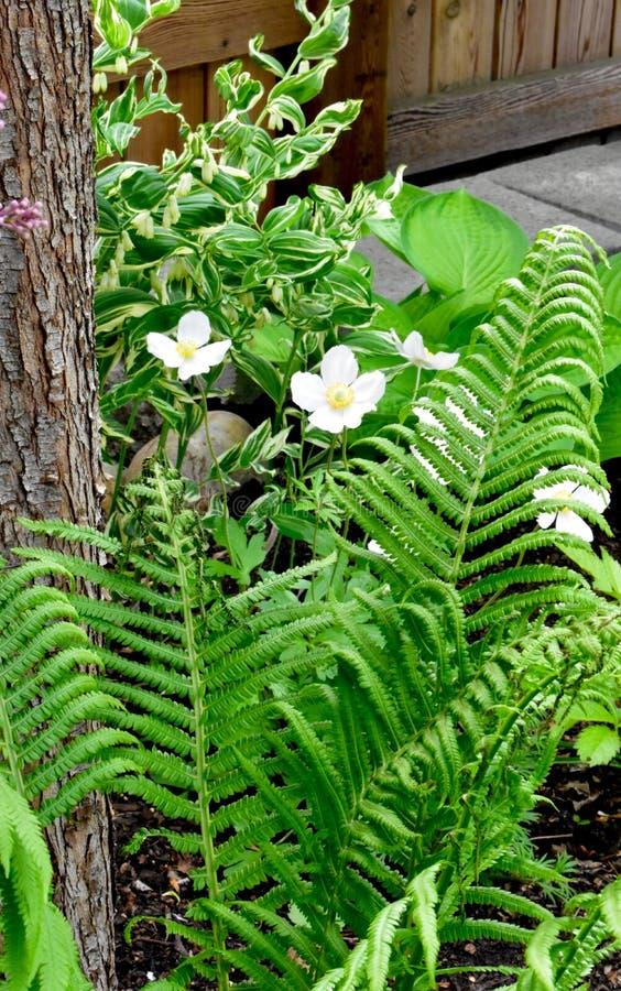 Flores blancas y Fern Fronds imagenes de archivo