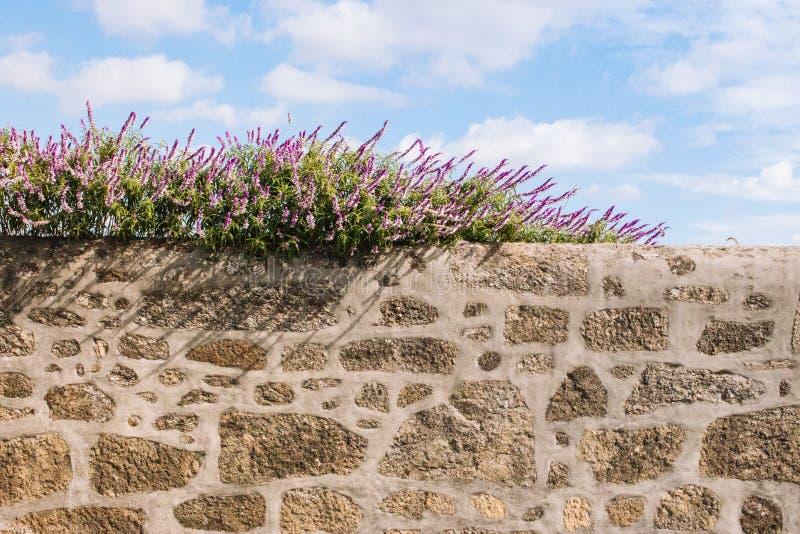 Flores blancas y púrpuras en la cerca de piedra contra fondo del cielo azul Flores florecientes en la pared de piedra antigua imágenes de archivo libres de regalías