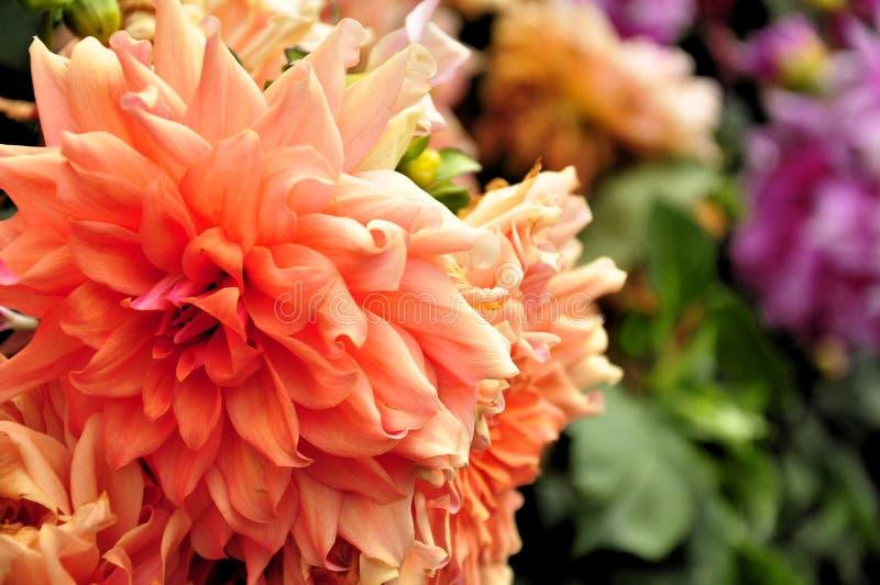 Flores bonitas foto de stock royalty free