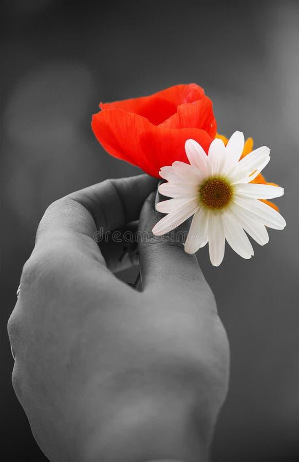 Flores bonitas foto de archivo. Imagen de hembra, flor - 56524744
