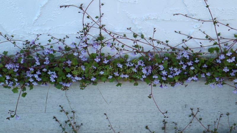 Flores bonitas imagen de archivo