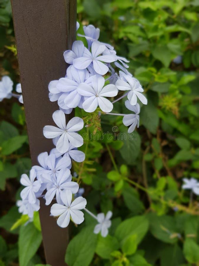 Flores bonitas imagens de stock royalty free