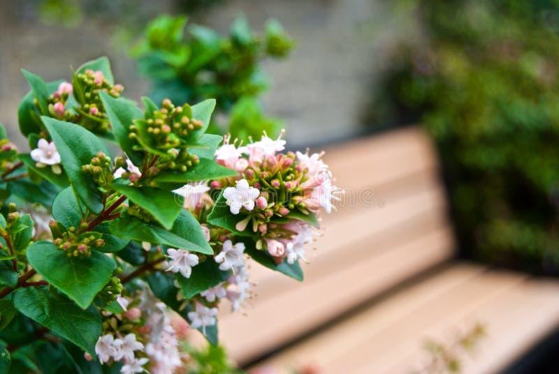 Flores bonitas & banco de madeira fotografia de stock