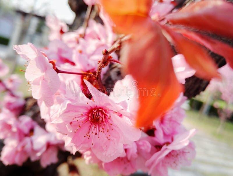 Flores bonitas cor-de-rosa das flores fotografia de stock