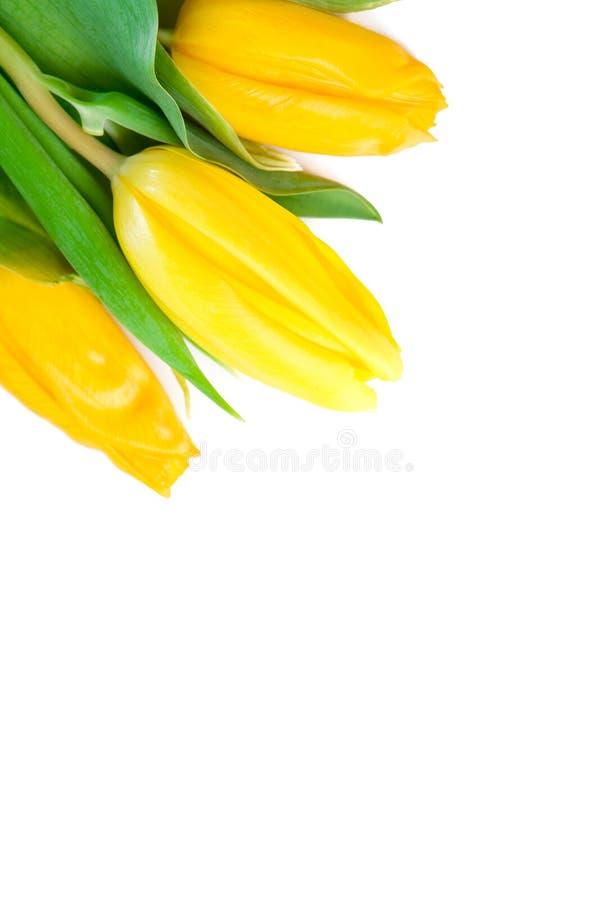 Download Flores bonitas da mola imagem de stock. Imagem de seasonal - 12804443