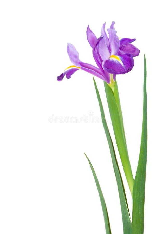 Download Flores bonitas da mola foto de stock. Imagem de isolado - 12804456