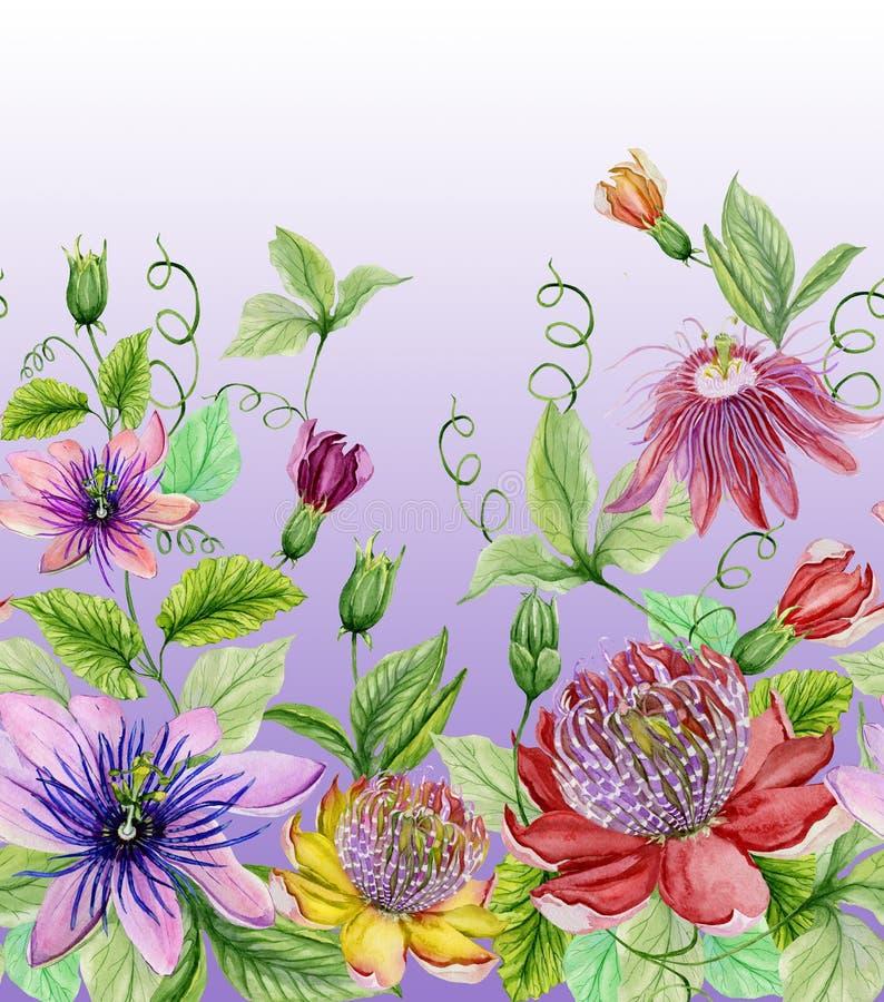 Flores bonitas da paixão ilustração royalty free