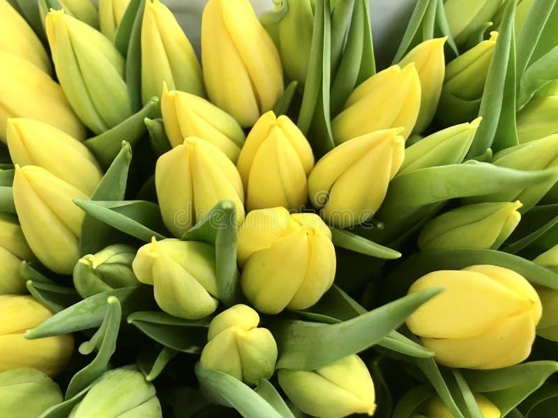 Flores bonitas das tulipas na estação de mola imagens de stock