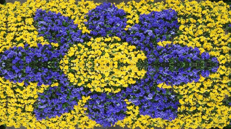 Flores bonitas do amor perfeito no parque, Litu?nia fotografia de stock royalty free