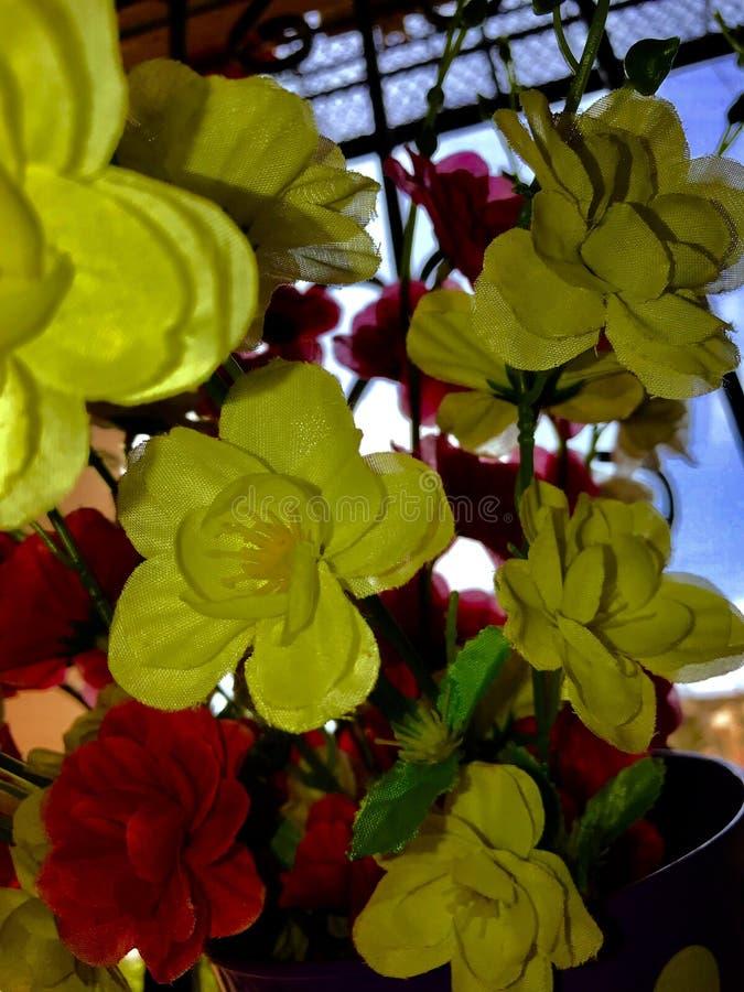 Flores bonitas do cosmos fotos de stock royalty free