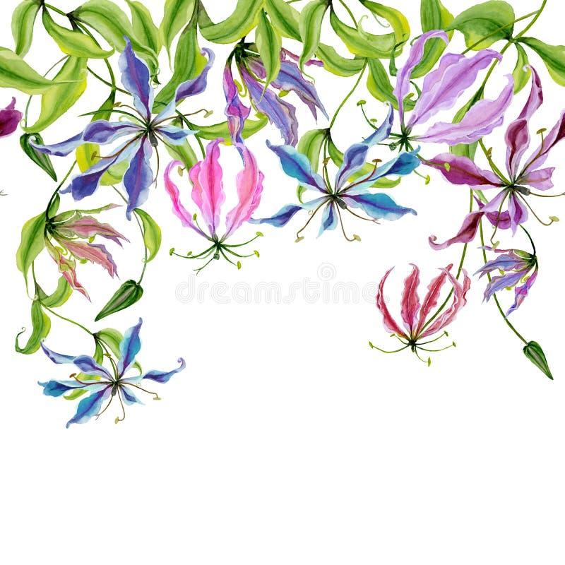 Flores bonitas do gloriosa nos galhos de escalada no fundo branco Teste padrão sem emenda Beira floral cor-de-rosa Pintura da agu ilustração do vetor