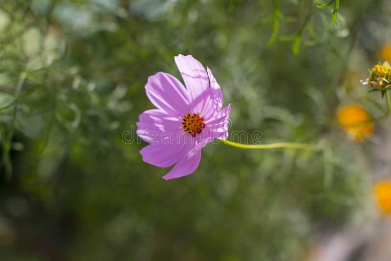 Flores bonitas do jardim imagens de stock
