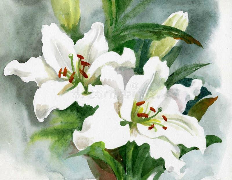 Flores bonitas do lírio branco ilustração do vetor
