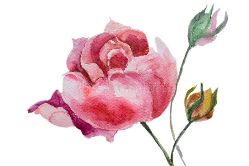 Flores bonitas do peony ilustração do vetor