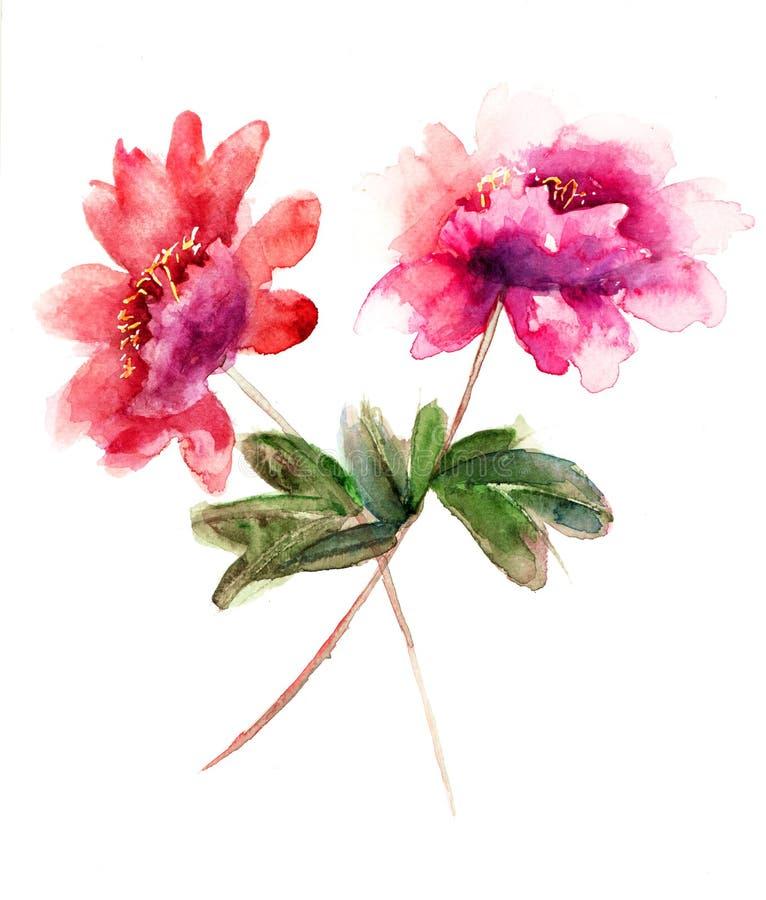 Flores bonitas do peony ilustração royalty free