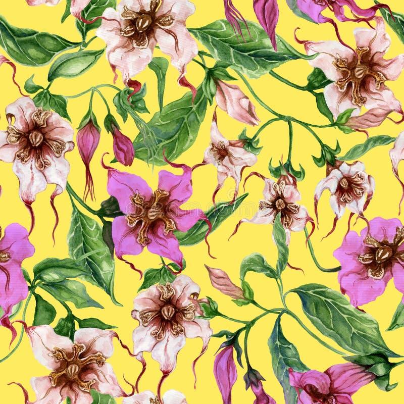 Flores bonitas do strophanthus nos galhos de escalada no fundo amarelo Teste padrão floral sem emenda Pintura da aguarela Pintado ilustração stock
