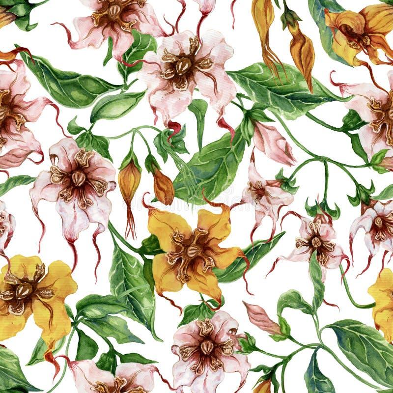 Flores bonitas do strophanthus nos galhos de escalada no fundo branco Teste padrão floral sem emenda Pintura da aguarela Pintado  ilustração do vetor
