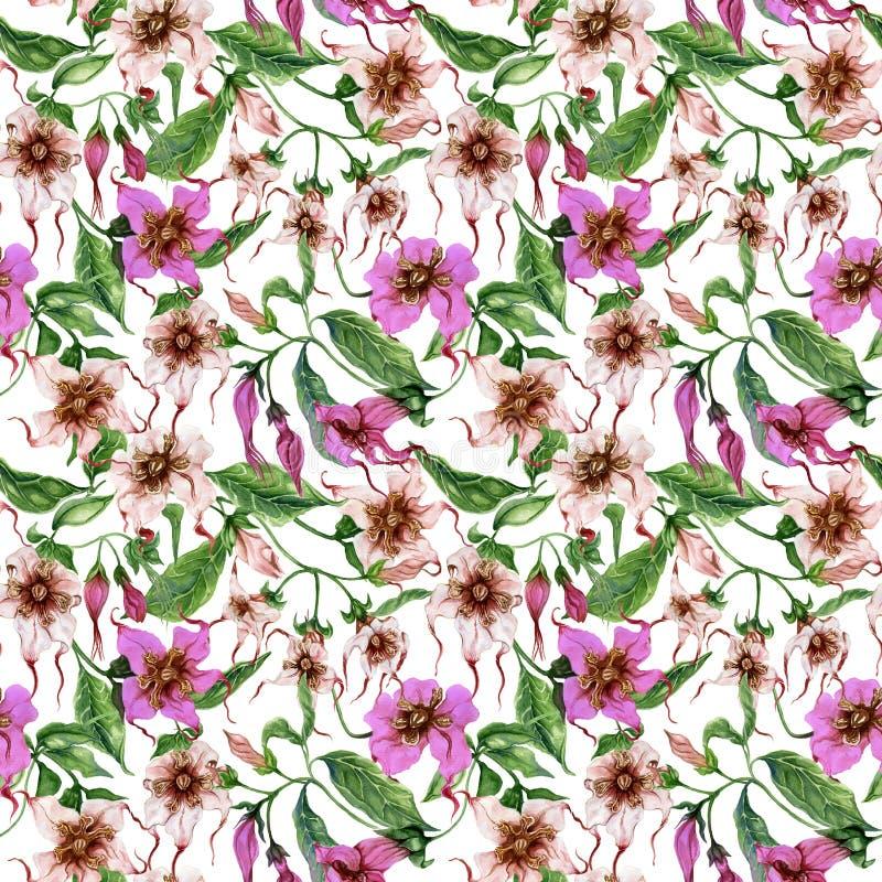 Flores bonitas do strophanthus nos galhos de escalada no fundo branco Teste padrão floral sem emenda Pintura da aguarela Pintado  ilustração royalty free