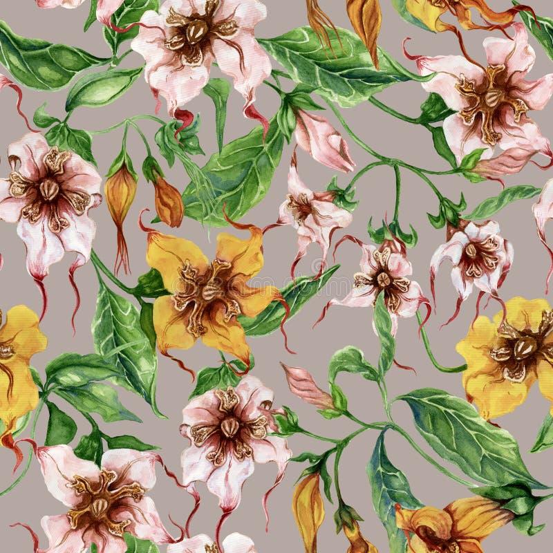 Flores bonitas do strophanthus nos galhos de escalada no fundo cinzento Teste padrão floral sem emenda Pintura da aguarela Pintad ilustração stock