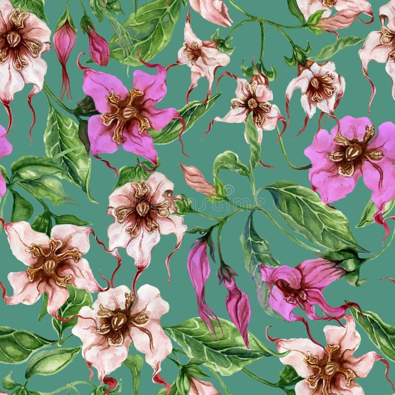 Flores bonitas do strophanthus nos galhos de escalada no fundo do jade Teste padrão floral sem emenda Pintura da aguarela Pintado ilustração stock