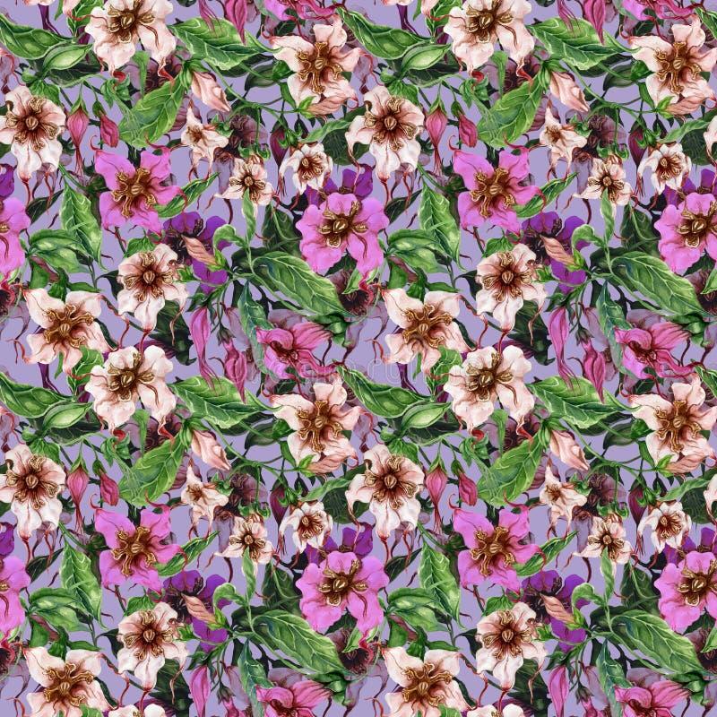 Flores bonitas do strophanthus nos galhos de escalada no fundo lilás Teste padrão floral sem emenda Pintura da aguarela Pintado à ilustração do vetor