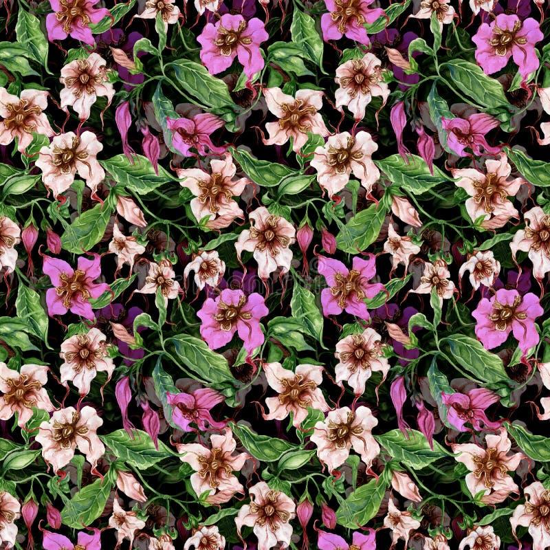 Flores bonitas do strophanthus nos galhos de escalada no fundo preto Teste padrão floral sem emenda Pintura da aguarela Pintado à ilustração do vetor