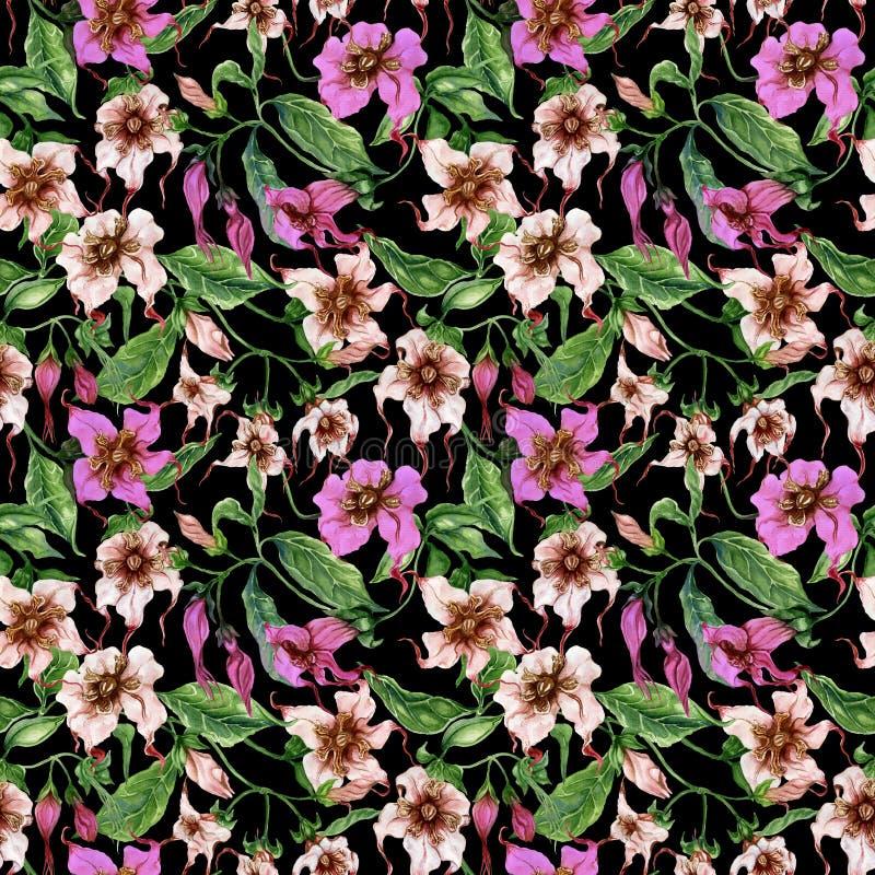 Flores bonitas do strophanthus nos galhos de escalada no fundo preto Teste padrão floral sem emenda Pintura da aguarela Pintado à ilustração royalty free