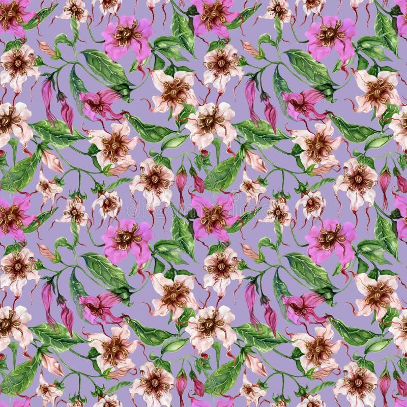 Flores bonitas do strophanthus nos galhos de escalada no fundo roxo Teste padrão floral sem emenda Pintura da aguarela Pintado à  ilustração royalty free