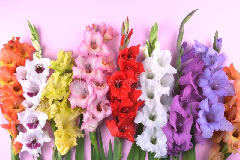 Flores bonitas do tipo de flor no fundo cor-de-rosa na moda foto de stock