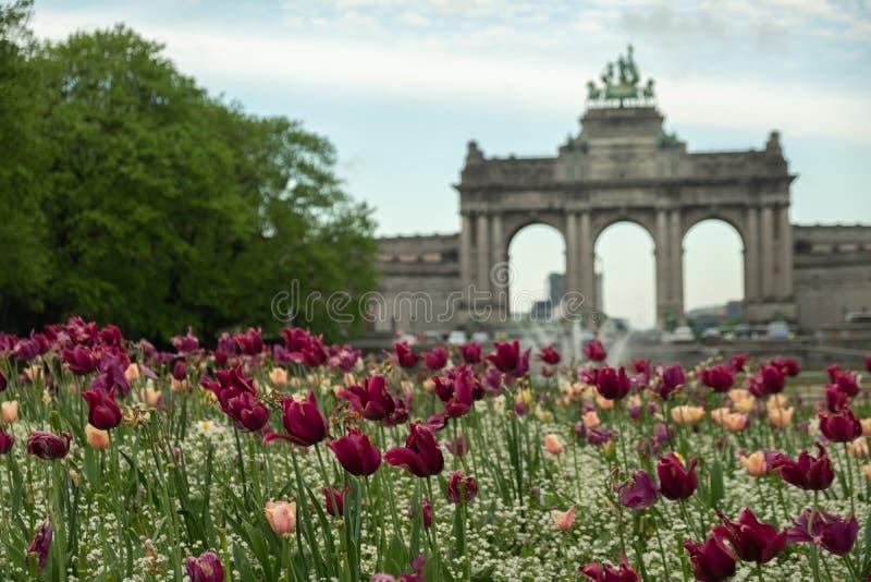 Flores bonitas e florescentes no Parque Jubileu, em Bruxelas fotografia de stock royalty free