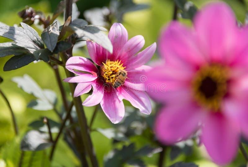Flores bonitas em um jardim botânico de Illinois fotografia de stock royalty free